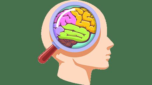 правое полушарие мозга